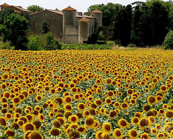 Sunflowers Poster featuring the photograph Summer Bliss by France Art