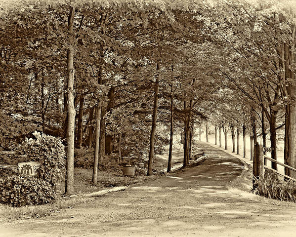 Country Poster featuring the photograph Summer Lane Sepia by Steve Harrington