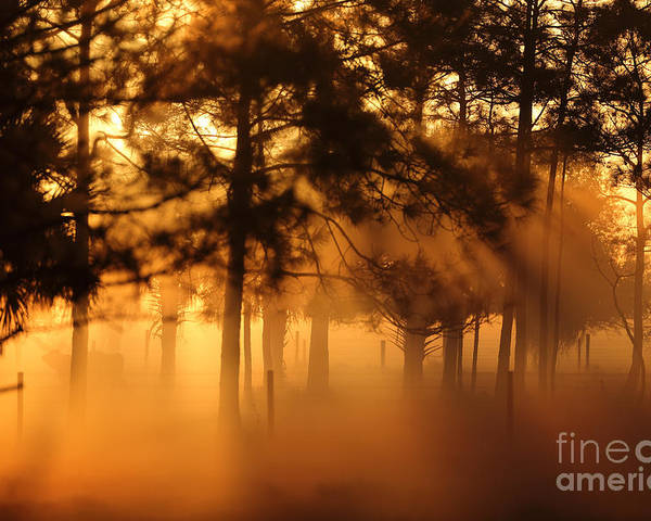 Trees Poster featuring the photograph Sun Beams by Rick Mann