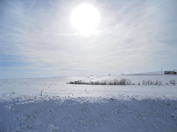 Sun Poster featuring the photograph Sun On Snow by Coleen Harty