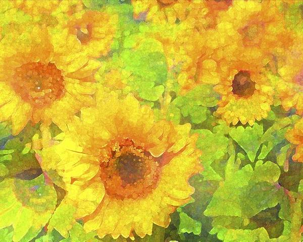 Floral Poster featuring the photograph Sunflower 19 by Pamela Cooper