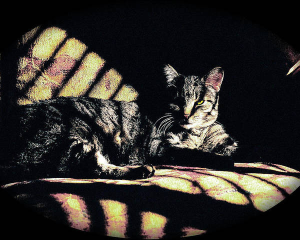 Cat Poster featuring the digital art Sunlight And Whiskers by Ronald Hurst