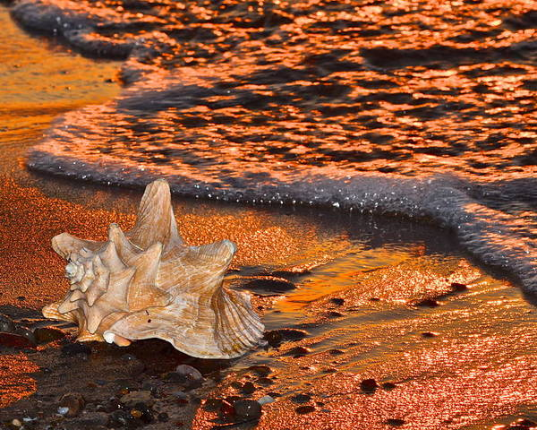 Tide Poster featuring the photograph Sunlights Glow by Frozen in Time Fine Art Photography