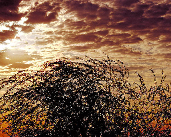 Nature Poster featuring the photograph Sunrise And Lacy Tree by Thomas Firak