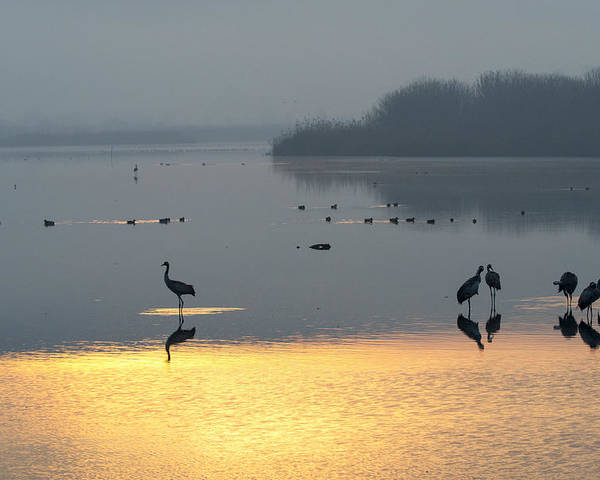 Dubi Roman Poster featuring the photograph Sunrise Over The Hula Valley Israel 1 by Dubi Roman