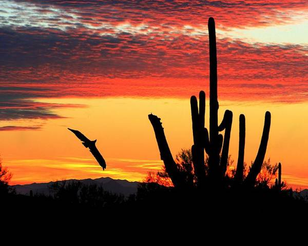 Landscape Poster featuring the photograph Sunrise From Heaven by Kimmi Craig