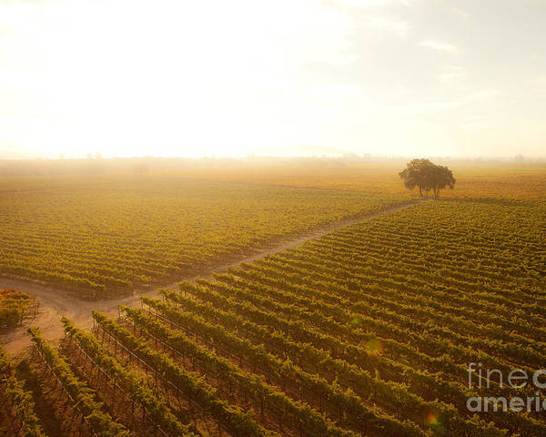 Vineyard Poster featuring the photograph Sunrise Over The Vineyard by Diane Diederich