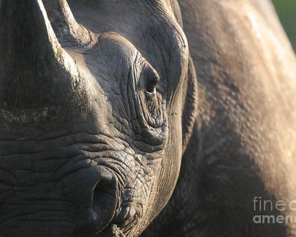 Black Rhino Poster featuring the photograph Sunrise Rhino by Alison Kennedy-Benson