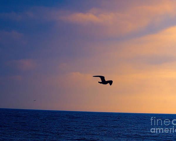 Bird Poster featuring the photograph Sunset Flight by Loretta Jean Photography