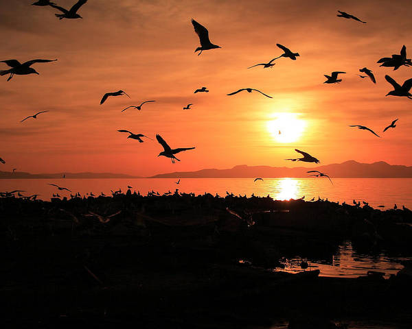 Sunset Poster featuring the photograph Sunset Flights by Gene Praag