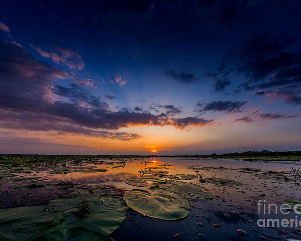 Sunset Poster featuring the photograph Sunset In Danube Delta by Radu Dumitrescu