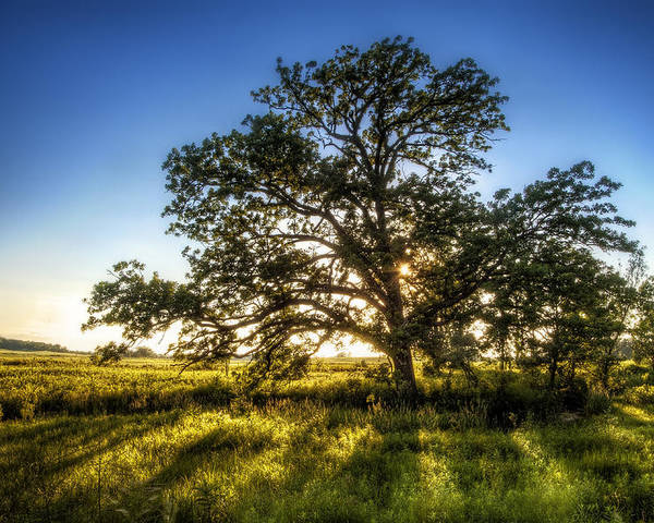Sunset Poster featuring the photograph Sunset Oak by Scott Norris