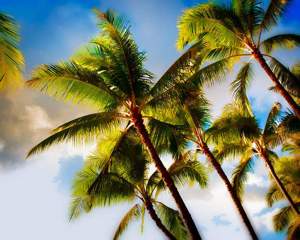 Blue Sky Poster featuring the photograph Sunset Palm Trees by Joe Carini