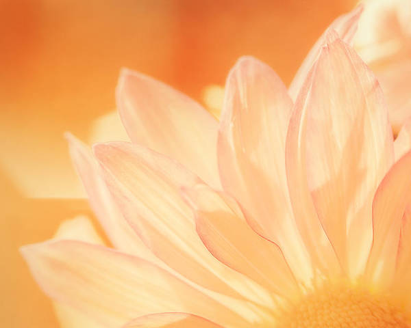 Flower Poster featuring the photograph Sunshine by Scott Norris