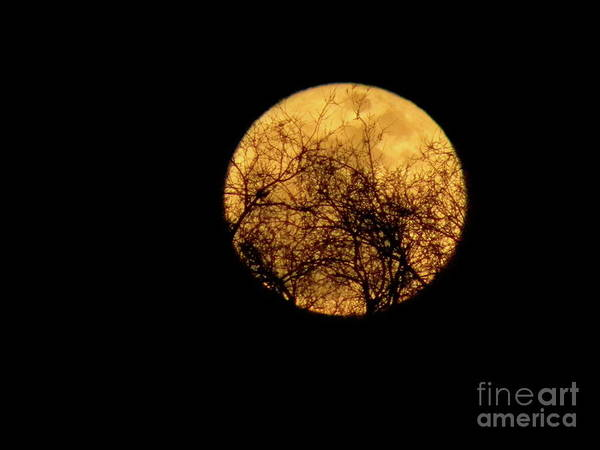 Super Moon Poster featuring the photograph Supermoon 2 by Laura Yamada