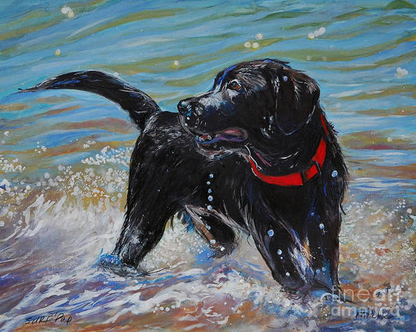 Black Labrador Retriever Puppy Poster featuring the painting Surf Pup by Molly Poole