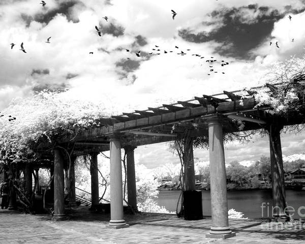 Augusta Georgia Parks Poster featuring the photograph Surreal Augusta Georgia Black And White Infrared - Riverwalk River Front Park Garden  by Kathy Fornal