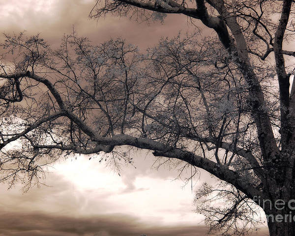 Surreal Nature Photos Poster featuring the photograph Surreal Fantasy Gothic South Carolina Oak Trees by Kathy Fornal