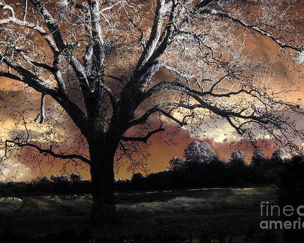 Surreal Nature Photos Poster featuring the photograph Surreal Fantasy Gothic Trees Nature Sunset by Kathy Fornal