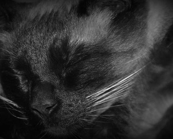 Sweet Dreams Poster featuring the photograph Sweet Dreams In Black And White by Lisa Wooten