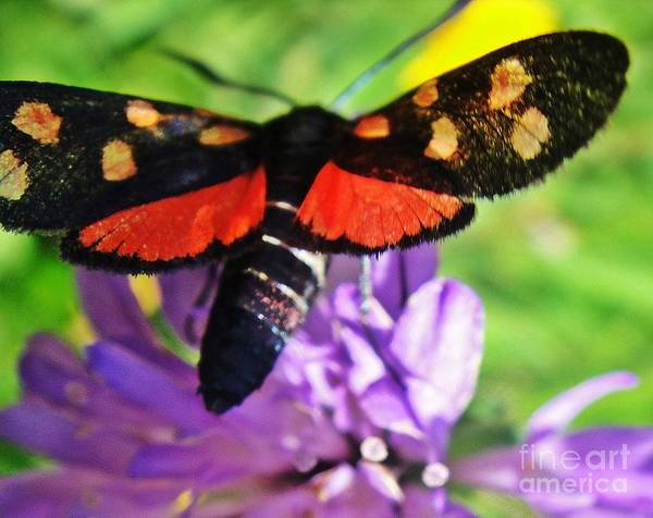 Butterfly Poster featuring the photograph Symphony Of Colors by Karin Ravasio