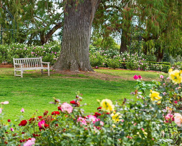 Take A Seat Beautiful Rose Garden Of The Huntington Library Poster By Jamie Pham