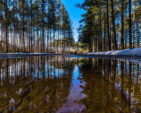 Kettle Moraine State Forest Poster featuring the photograph Tall Pines by Randy Scherkenbach
