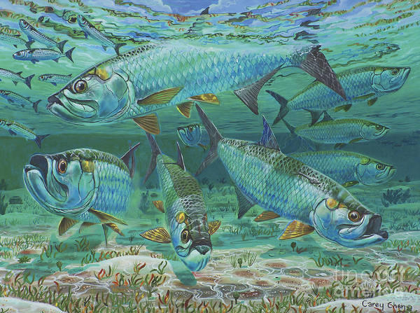 Tarpon Poster featuring the painting Tarpon Rolling In0025 by Carey Chen