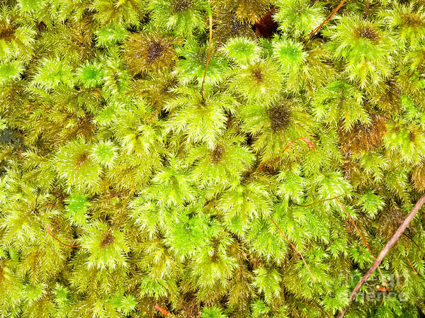 Abstract Poster featuring the photograph Tender Fresh Green Moss Background Texture Pattern by Stephan Pietzko