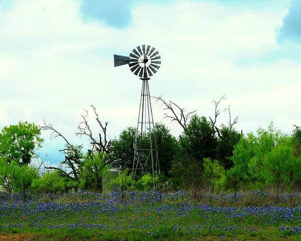 Texas Poster featuring the photograph Texas Windmill And Bluebonnets by Marilyn Burton