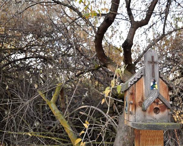 Melba; Idaho; Birdhouse; Shelter; Outdoor; Fall; Autumn; Leaves; Plant; Vegetation; Land; Landscape; Tree; Branch; House; Cross; Poster featuring the photograph The American Dusky Flycatcher by Image Takers Photography LLC - Carol Haddon