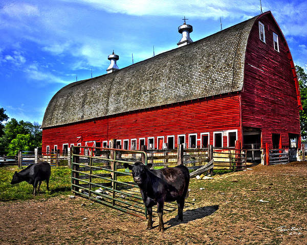 Barn Poster featuring the painting The Barnyard by Tom Bell