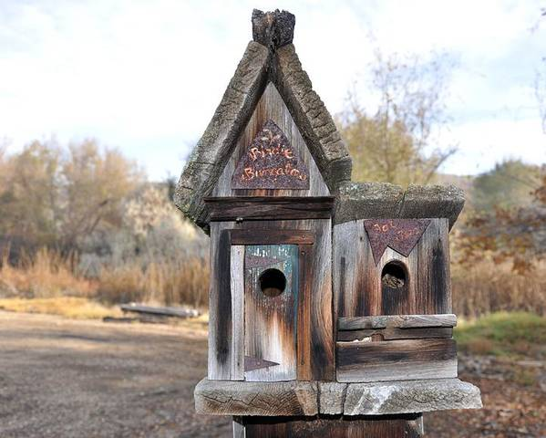 Melba; Idaho; Birdhouse; Shelter; Outdoor; Fall; Autumn; Leaves; Plant; Vegetation; Land; Landscape; Tree; Branch; House; Poster featuring the photograph The Birdhouse Kingdom - Cedar Waxing by Image Takers Photography LLC - Carol Haddon