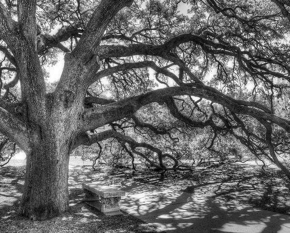 Tree Poster featuring the photograph The Century Oak by Scott Norris