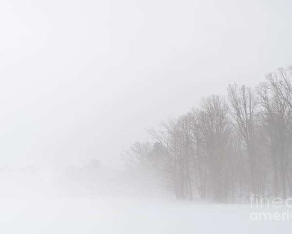 Landscapes Poster featuring the photograph The Edge Of The Misty Woods by Cheryl Baxter