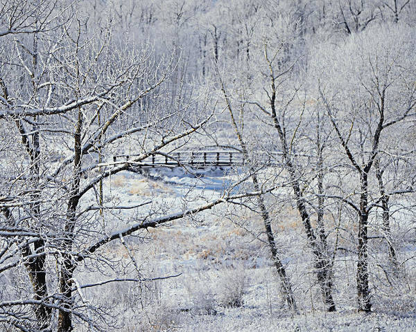 Frozen Bridge Poster featuring the photograph The Frozen Bridge by Maria Angelica Maira