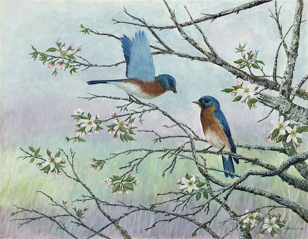Bluebirds; Trees; Wildlife Poster featuring the painting The Gift by Ben Kiger