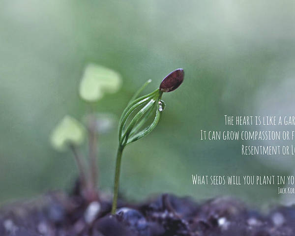 Seed Poster featuring the photograph The Heart Is Like A Garden by Maria Ismanah Schulze-Vorberg