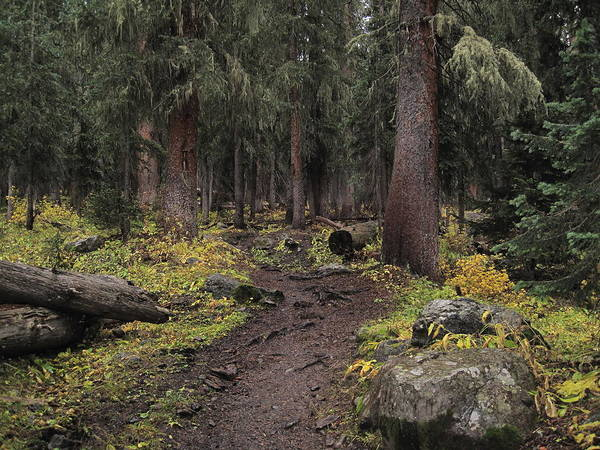 Landscapes Poster featuring the photograph The High Forest by Eric Glaser