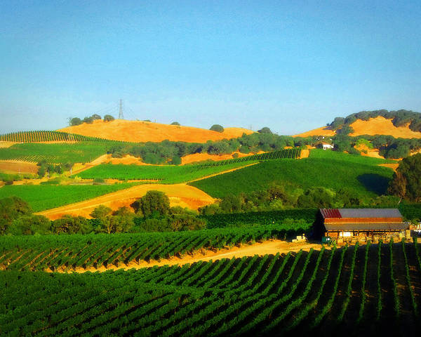 Vineyards Poster featuring the photograph The Los Carneros District by Timothy Bulone