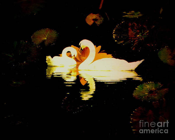 Swan Poster featuring the photograph The Love Connection by JeanDarcel Michel