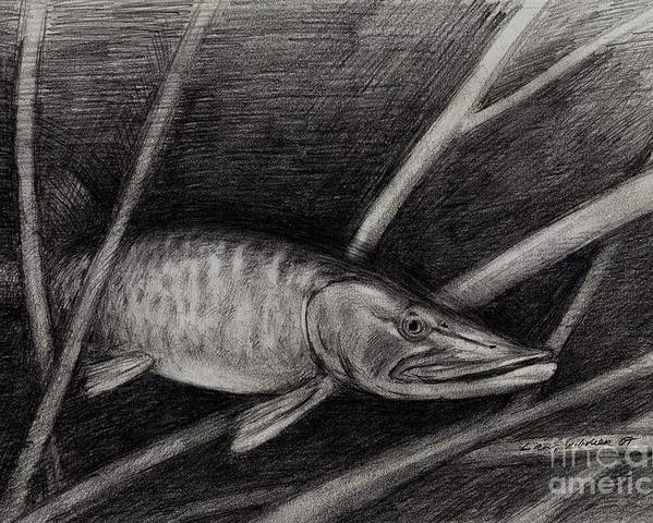 Fish Poster featuring the drawing The Musky by Larry Green