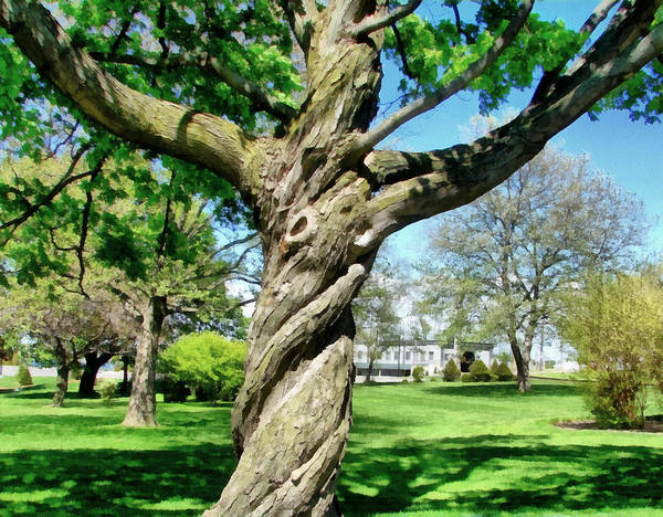 Trees Poster featuring the photograph The Old Lady Of The Green by Michelle Calkins