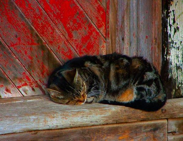 Cats Poster featuring the photograph The Old Mill Cat by Julie Dant