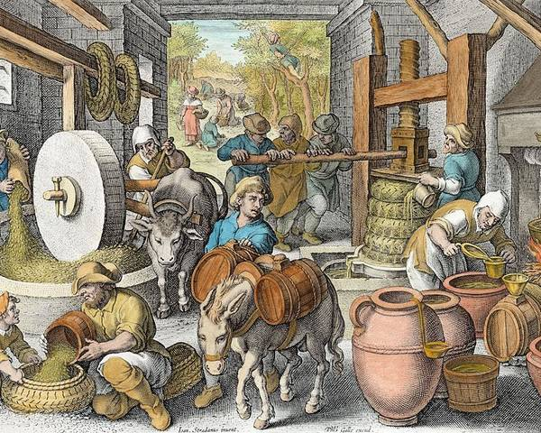 Press Poster featuring the drawing The Production Of Olive Oil, Plate 13 by Jan van der Straet