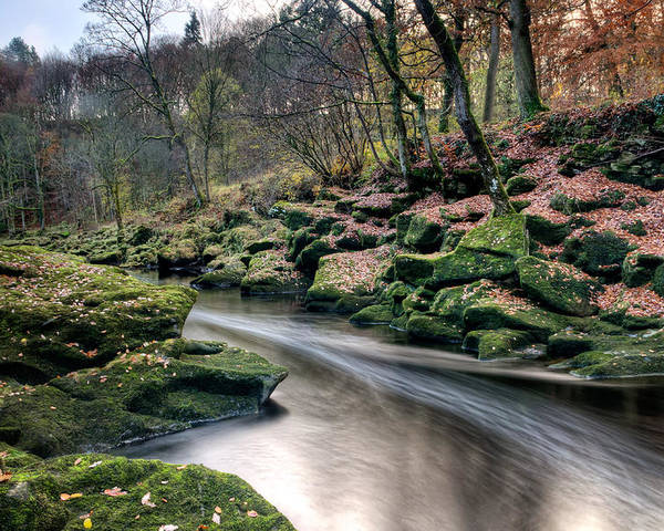 Trees Poster featuring the photograph The Shimmering Strid by Chris Frost