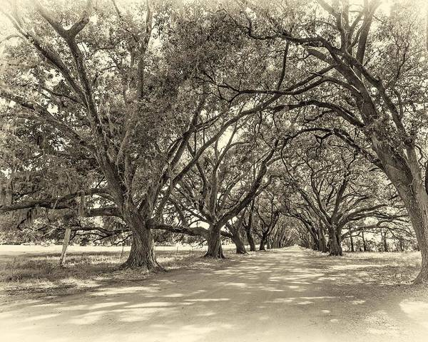 Evergreen Plantation Poster featuring the photograph The Southern Way Sepia by Steve Harrington