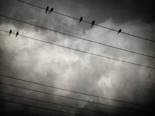 Bird Poster featuring the photograph The Trace 11.24 by Taylan Apukovska
