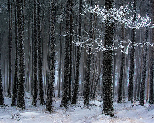 Winter Poster featuring the photograph The Trees Has Horns by Dragan Lapcevic