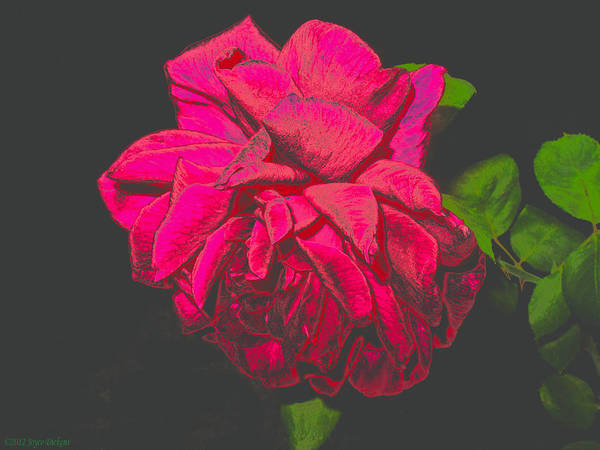 Rose Poster featuring the photograph The Ultimate Red Rose by Joyce Dickens